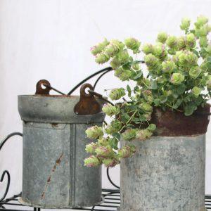 Vintage Zink Eimer im Shabby Chic Stil. Der Eimer aus Metall mit rostiger Patina und mit Henkel ist als ein wundervoller Blumentopf geeignet. Unikat Zinkeimer Online kaufen