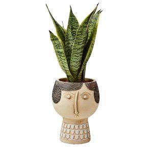 Blumentopf mit Gesicht für Pflanzen und die Dekoration im Wohnzimmer. Blumentopf aus Beton in der Form eines Kopf für Topfpflanzen von der skandinavischen Marke Affari