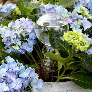 Skandinavische Bewässerungskugel aus Glas zum Stecken in den Pflanzentopf. Wasserversorgung im Urlaub für Blume & Pflanze. Hängevase und Blumentopf für Pflanzen
