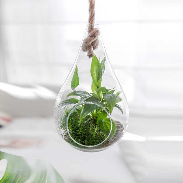 Hängevase aus Glas mit Seil zum Aufhängen. Für Sukkulenten und Blumen. Blumenvasen im skandinavischen Stil für die Jungle Deko Zuhause. Hängende Wohndeko